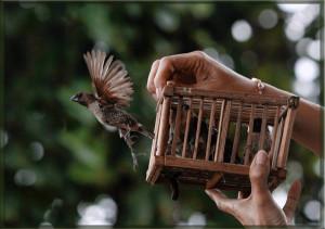 Фото: Птицу выпускают из клетки на волю